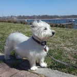 Dog Walkers In Woodbridge NJ 07095​